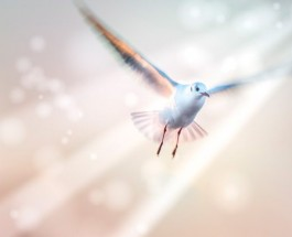 Permanent action of the Holy Spirit
