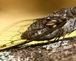 What I learnt from the cicadas