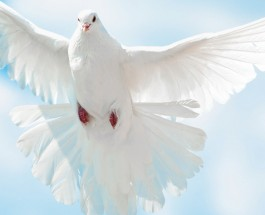 Why many don't receive the Holy Spirit
